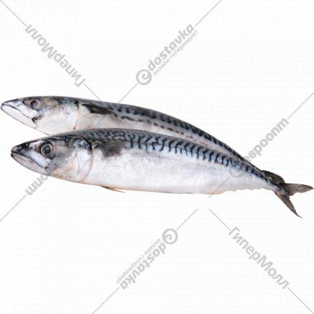 Рыба мороженая «Скумбрия» атлантическая, 1 кг., фасовка 1-1.4 кг