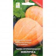 Семена тыквы крупноплодной «Землячка» 10 шт