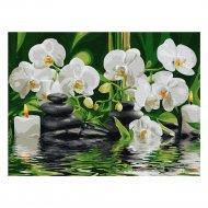 Живопись по номерам «Azart» белые орхидеи, на картоне, 30х40 см.