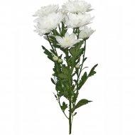 Хризантема кустовая «Белая» 1 шт