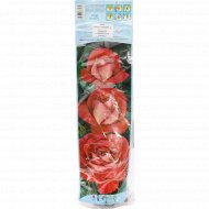 Роза чайно-гибридная «Bigolette» 1 шт.