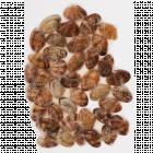 Клемы вонголе в раковине, варено-мороженные, 500 г