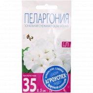Пеларгония «Снежана белая» низкорослая, 4 шт.