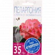 Пеларгония «Стелла розовая» с коричневым листом, 4 шт.