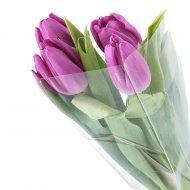 Букет из тюльпанов, 5 шт.