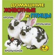 Книжка-картинка «Домашние животные и птицы».