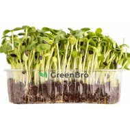 Микрозелень семечка «GreenBro» 70 г