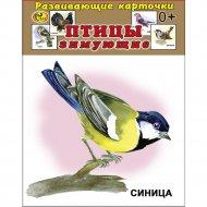 Карточки развивающие «Птицы зимующие».