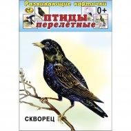 Карточки развивающие «Птицы перелетные».