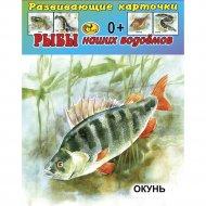 Карточки развивающие «Рыбы».