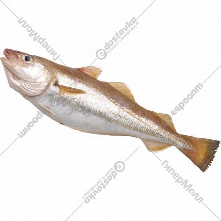 Рыба мороженая «Мерланг обыкновенный» без головы, 1 кг., фасовка 0.5-1 кг