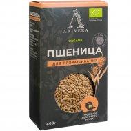 Зерна пшеницы «Arivera» для проращивания, 400 г.