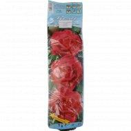 Роза чайно-гибридная «Carina» цвет розовый, 1 шт.