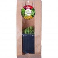 Микро зелень «Пажитник» растущая в контейнере, 10 г