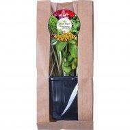 Микрозелень «Подсолнечник» растущая в контейнере, 10 г