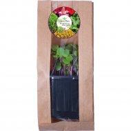 Микрозелень «Редис Зеленый» растущая в контейнере, 10 г