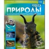 Журнал 'Чудеса природы».
