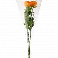Букет длинных роз, 3 шт 60см.