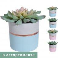 Искусственное растение «Белбогемия» Суккулент, 319000180