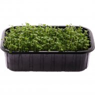 Микрозелень «Руккола» 125 г