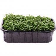 Микрозелень «Кресс-салат» 125 г
