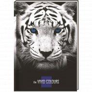 Блокнот А5 «CFS Vivid Colours» 80 листов.