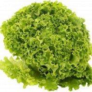 Салат листовой «Латук» 1 шт.