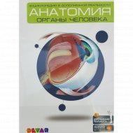 4D-энциклопедия «Анатомия: органы человека».