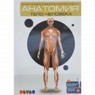 4D-энциклопедия «Анатомия: тело человека».