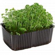 Микрозелень кресс-салата, 1 шт.