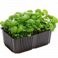 Микрозелень базилик зеленый, 1 шт.