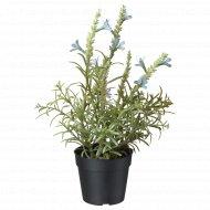 Искусственное растение в горшке «Фейка» 9 см.