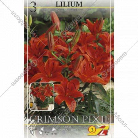 Семена лилия «Crimson Pixie» asiatic.