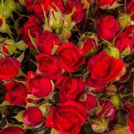 Фотообои «Fox» Яркие красные розы