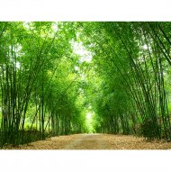 Фотообои «Fox» Бамбуковая арка