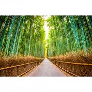 Фотообои «Fox» Бамбуковая роща