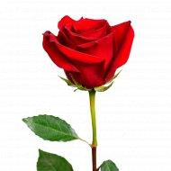 Роза «Красная» 40 см, 1 шт