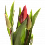 Букет тюльпанов 3 шт, 40 см.