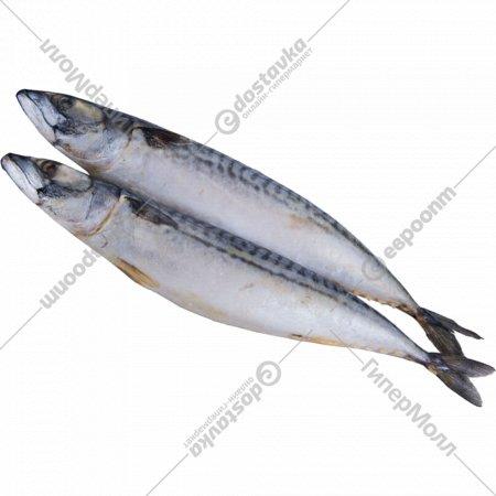 Рыбная продукция «Скумбрия 400-600» атлантическая, мороженная, 1 кг., фасовка 1.3-1.4 кг