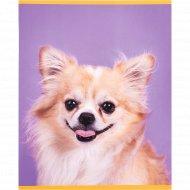 Тетрадь «Веселые собачки» А5, 48 л