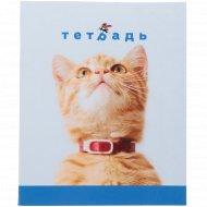 Тетрадь «Кот» 48 листов.