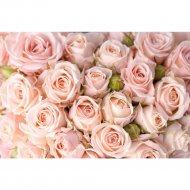 Фотообои «Fox» Нежность роз, камень